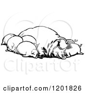 Clipart Of A Vintage Black And White Group Of Sleeping Pigs Royalty Free Vector Illustration