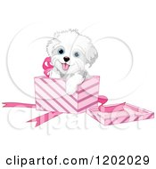 Cartoon Of A Cute Playful Bichon Frise Or Maltese Puppy Dog In A Pink Gift Box Royalty Free Vector Clipart