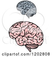 Gray And Pink Human Brains 2