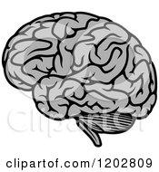 Gray Human Brain 2