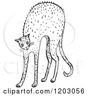Clipart Of A Vintage Black And White Scared Cat Royalty Free Vector Illustration