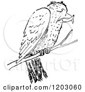 Clipart Of A Vintage Black And White Crossbill Bird Royalty Free Vector Illustration