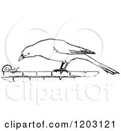 Clipart Of A Vintage Black And White Bird And Snail Royalty Free Vector Illustration
