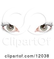 Womans Green Eyes With Long Eye Lashes Clipart Picture