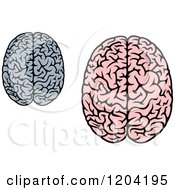 Gray And Pink Human Brains 3