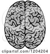 Gray Human Brain 3