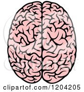 Pink Human Brain 3