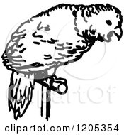 Clipart Of A Vintage Black And White Parrot Pet Royalty Free Vector Illustration