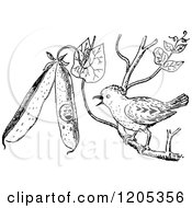 Clipart Of A Vintage Black And White Pewee Bird Royalty Free Vector Illustration