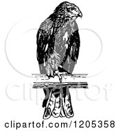 Cartoon Of A Vintage Black And White Perched Osprey Royalty Free Vector Clipart