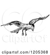 Clipart Of A Vintage Black And White Flying Raven Royalty Free Vector Illustration