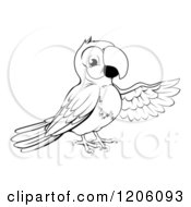 Cartoon Of A Black And White Presenting Parrot Royalty Free Vector Clipart