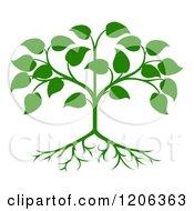 Clipart Of A Green Seedling Tree With Leaves And Roots Royalty Free Vector Illustration