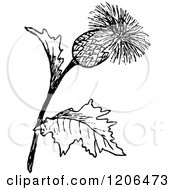 Clipart Of A Vintage Black And White Thistle Plant Royalty Free Vector Illustration by Prawny Vintage