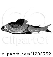 Clipart Of A Vintage Black And White Grayling Fish Royalty Free Vector Illustration by Prawny Vintage