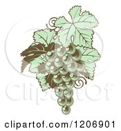 Clipart Of Gren Grapes With Leaves In Woodblock Royalty Free Vector Illustration by AtStockIllustration
