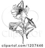 Clipart Of A Vintage Black And White Easter Lily Royalty Free Vector Illustration