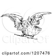 Clipart Of A Vintage Black And White Owl Taking Flight Royalty Free Vector Illustration