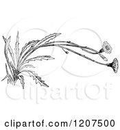 Vintage Black And White Flowering Weed
