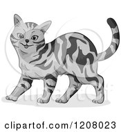 Cartoon Of A Cute Gray Tabby American Shorthair Cat Royalty Free Vector Clipart