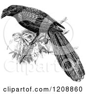 Clipart Of A Vintage Black And White Grooved Bill Ani Cuckoo Royalty Free Vector Illustration