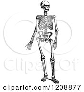 Vintage Black And White Human Skeleton