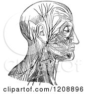 Vintage Black And White Diagram Of Facial Nerve And Cervical Plexus
