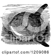 Vintage Black And White Sun Fish In Water