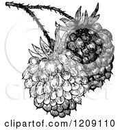 Vintage Black And White Raspberries