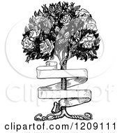 Clipart Of A Vintage Black And White Banner And Rose Bush Royalty Free Vector Illustration by Prawny Vintage