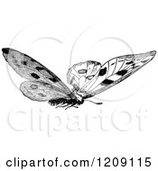 Vintage Black And White Butterfly 2