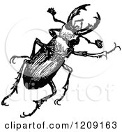 Vintage Black And White Stag Beetle