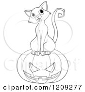 Black And White Curious Cat Sitting On A Halloween Jackolantern Pumpkin