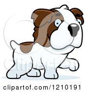 Walking St Bernard Dog