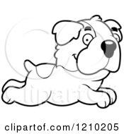 Black And White Running St Bernard Dog