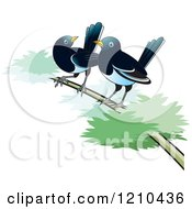Clipart Of Two Magpies On A Branch Royalty Free Vector Illustration