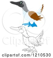 Cartoon Of An Outlined And Colored Blue Footed Boobie Bird Royalty Free Vector Clipart by Alex Bannykh