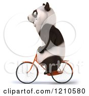Clipart Of A Happy Panda Bear Riding A Bicycle 2 Royalty Free CGI Illustration