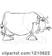Cartoon Of An Outlined Dairy Cow Eating Grass Royalty Free Vector Clipart