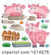 Happy Pigs With Mud A Fence And Slop