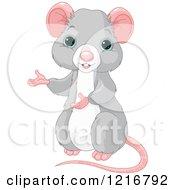 Cute Blue Eyed Rat Presenting