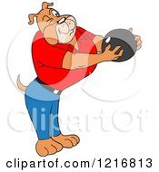 Bulldog Holding A Bowling Ball And Aiming