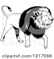 Clipart Of A Black And White Walking Lion Royalty Free Vector Illustration by dero