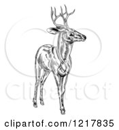 Clipart Of A Woodcut Deer Stag In Black And White Royalty Free Vector Illustration