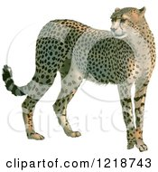 Clipart Of A Standing Cheetah Royalty Free Vector Illustration