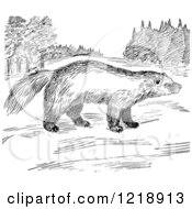 Clipart Of A Black And White Wolverine In A Meadow Royalty Free Vector Illustration by Picsburg