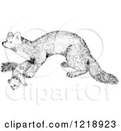 Black And White Marten