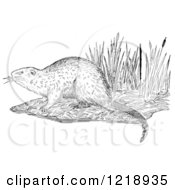 Clipart Of A Black And White Muskrat On A Shore Royalty Free Vector Illustration by Picsburg #COLLC1218935-0181
