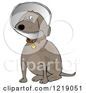 Clipart Of A Sitting Brown Dog Wearing An Elizabethan Colar Cone Royalty Free Illustration