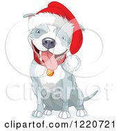 Clipart Of A Cute Gray And White Christmas Pit Bull Wearing A Santa Hat And Sitting Royalty Free Vector Illustration